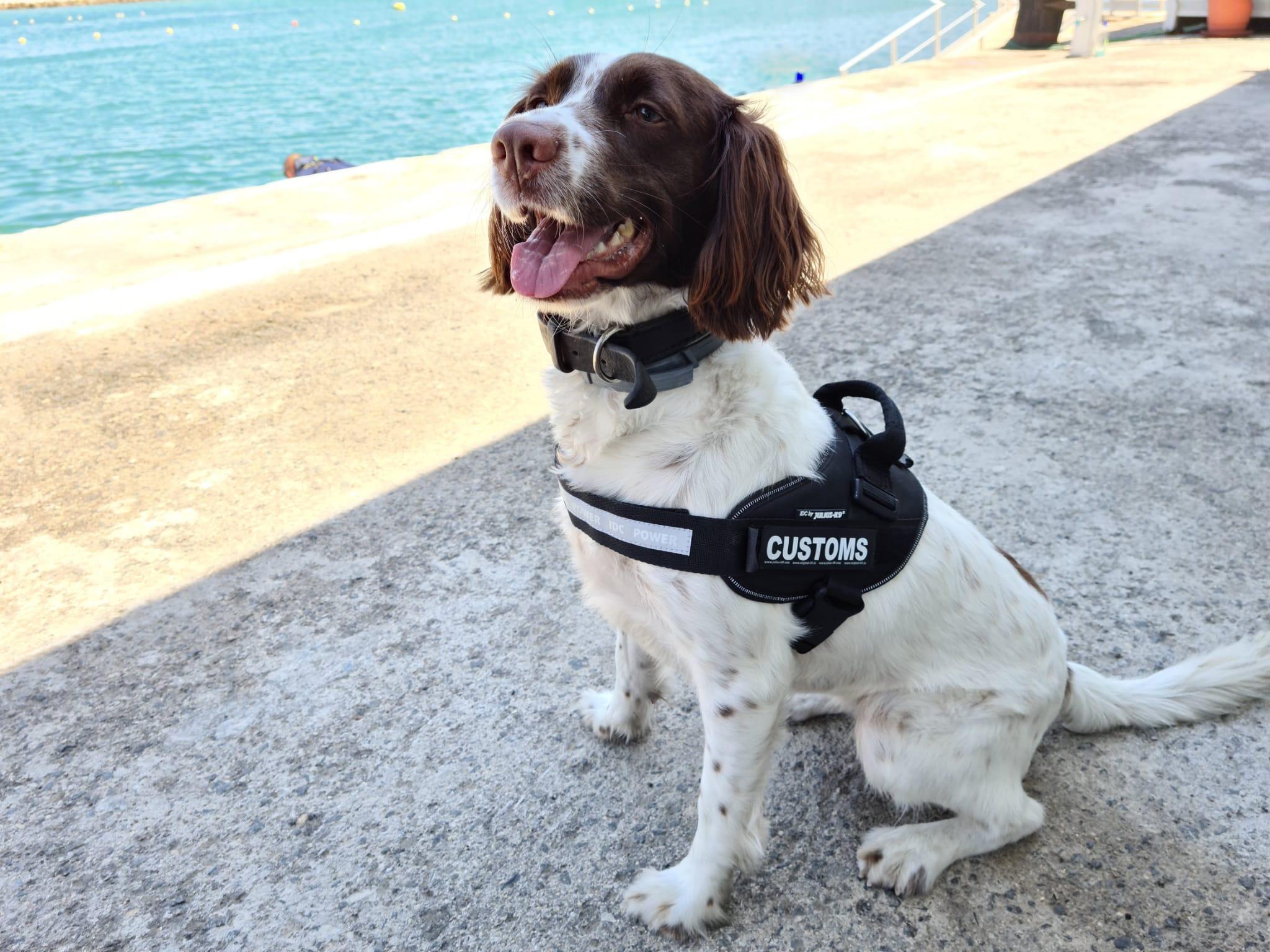 Perro para la detección de drogas. Foto NG