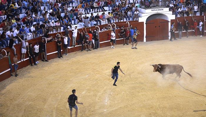 Un momento del Toro del Aguardiente con el que se despide la Feria de San Roque