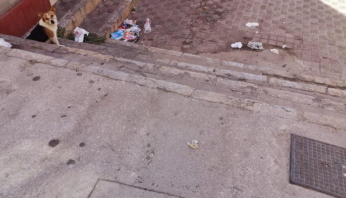 El PSOE urge a una limpieza integral de calles en las que los vecinos denuncian plagas