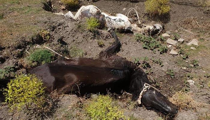Caballos muertos, en una foto de Verdemar