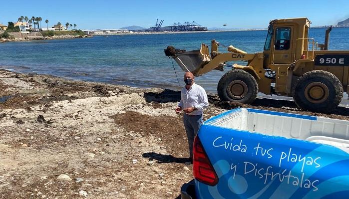 El Ayuntamiento de Algeciras vuelve a eliminar el alga invasora de El Chinarral