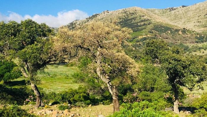 Agaden alerta del peligro de la 'lagarta peluda' en Los Alcornocales y El Estrecho