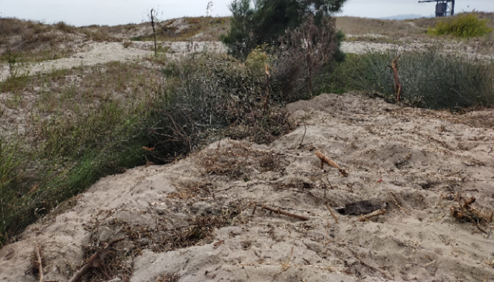 Imagen de la duna de Guadarranque. Foto: Verdemar