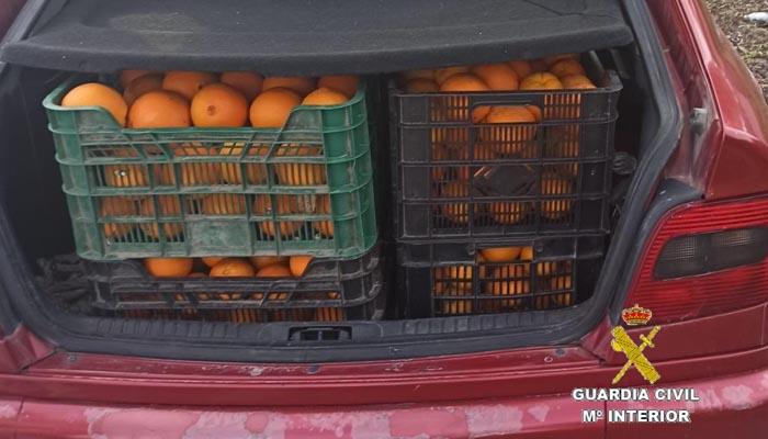El vehículo del detenido, cargado de las naranjas robadas