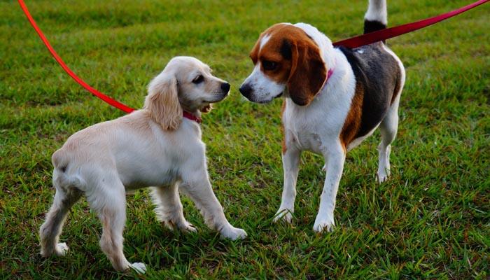 Los parques caninos estarán disponibles en verano, según el gobierno