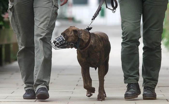 Foto de archivo de un perro con bozal
