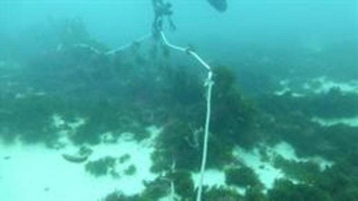 Ecologistas denuncian la pesca con redes de enmalle de deriva