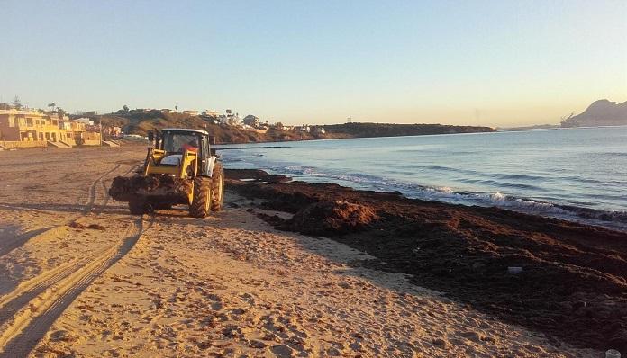 Continúan en la comarca los trabajos para retirar algas del litoral