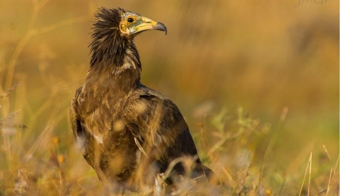 Agaden pide la ampliación y mejora del Parque Natural del Estrecho