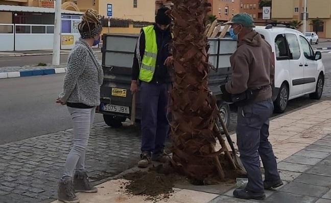 La edil y operarios municipales junto a una palmera. Foto: lalínea.es