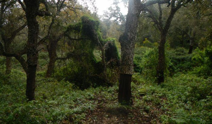 Imagen de archivo del Parque de Los Alcornocales