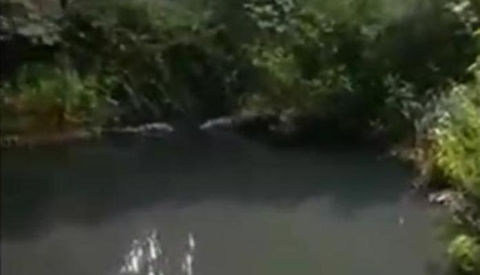 Imagen del río de La Vega aportada por Verdemar