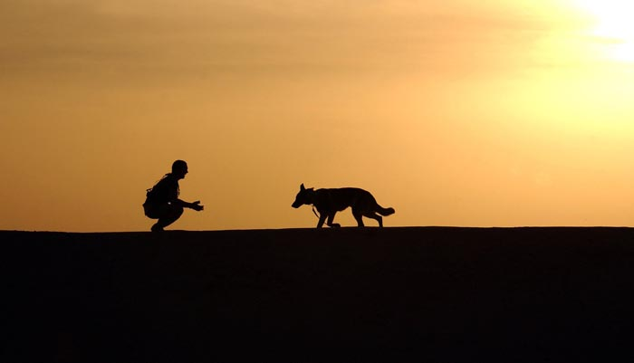 El perro es uno de los animales que más se regalan