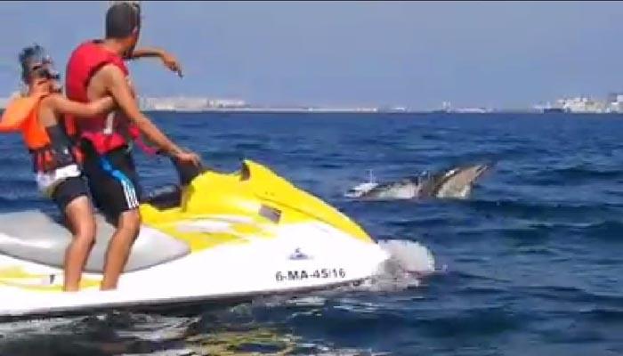 Imagen de una moto náutica cerca de unos delfines