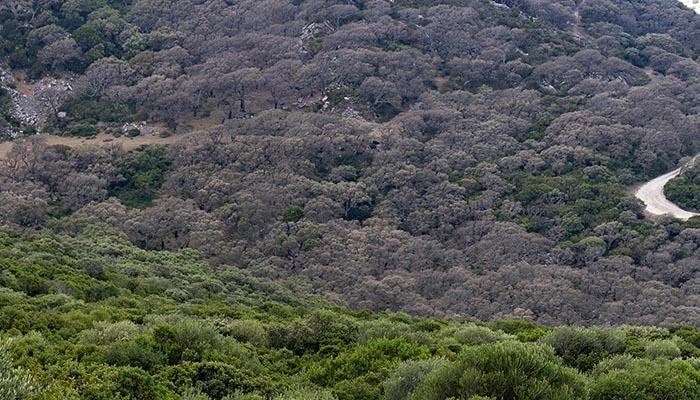 Los ecologistas adjuntan a su nota esta fotografía, en el término municipal de Tarifa