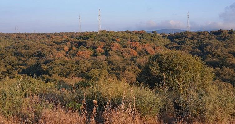 Una zona de alcornocales en el Campo de Gibraltar. Foto: NG