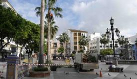 Arranca la temporada de poda de palmeras en Algeciras