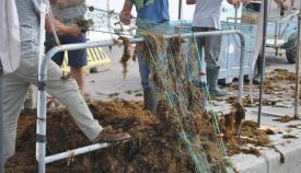 El alcalde de Algeciras agradece la ayuda de la Junta al sector pesquero