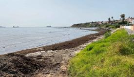 El Gobierno insiste en buscar soluciones para frenar el alga invasora