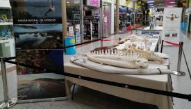 El Parque del Estrecho organiza una exposición en el Gran Sur de La Línea