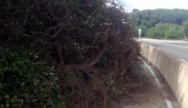 Imagen con la que el Ayuntamiento de San Roque denuncia el mal estado del carril bici