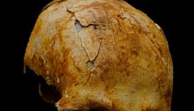 En el hallazgo se encontró un cráneo humano de un hombre de mediana edad