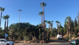 Parques y Jardines sigue adecentando las zonas verdes de Algeciras