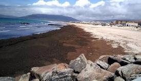 Una playa de Tarifa repleta de algas. Foto: NG