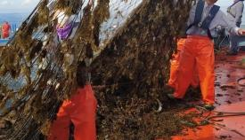 Las redes de profesionales del sector minadas de algas