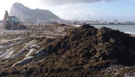 Los temporales han llevado a miles de algas al litoral linense