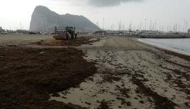 La Playa de Poniente, en La Línea, repleta de algas. Foto: lalínea.es