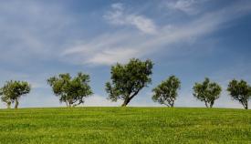 El medio ambiente toma el protagonismo en Algeciras