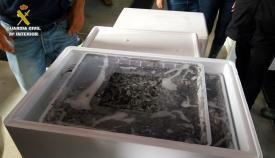 Los detenidos pretendían supuestamente exportar las angulas a Marruecos