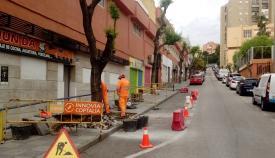 Reemplazados los árboles de la subida a Parque Bolonia en Algeciras