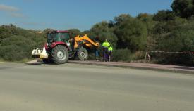 Los operarios replantado los ejemplares llegados a San Roque. Foto Multimedia SR