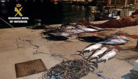 Imagen de los atunes aportada por la Guardia Civil