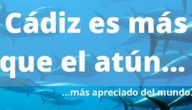 La iniciativa 'Cádiz Bienmesabe 2021' llega también a La Línea. Foto: NG