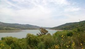 Una imagen reciente de Charco Redondo, pantano ubicado en Los Barrios