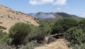 Estabilizado el incendio forestal declarado hoy en Tarifa
