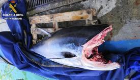 Decomisados en Tarifa 15 atunes pescados de forma ilegal