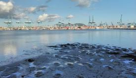 Agaden lamenta los constantes olores del futuro Lago Marítimo