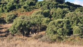 Verdemar recurrirá la intención del Ayuntamiento de eliminar Huerta Las Pilas