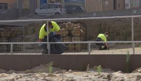 Continúa la limpieza de las Murallas Medievales en Algeciras