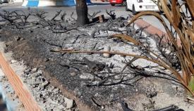 Un parterre quemado en La Línea. Foto: lalínea.es