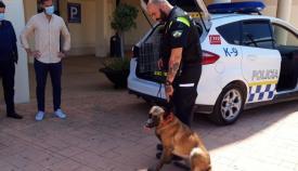 Un perro de la Unidad Canina de la Policía Local