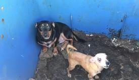Dos de los perros que estaban en la finca