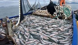 Verdemar lamenta la falta de medidas contra la pesca de enmalle en el Estrecho