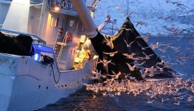 Observadores científicos realizarán unos 70 embarques para alcanzar una pesca sostenible