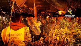 Imagen de la plantación de marihuana hallada en San Roque