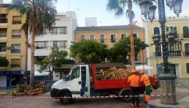 El Ayuntamiento realiza trabajos de poda en las palmeras de Algeciras